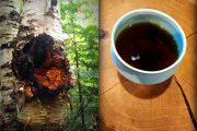 chaga harvest batch#3